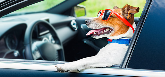 The New Age: Dogs Enter the Automotive Industry